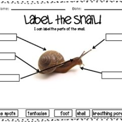 Earthworm Diagram Worksheet Outlet Wiring Let's Label The Creatures! Worm-snail-fish Labeling Unit By Fancy In Fourth