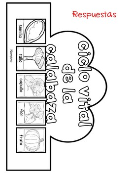 Life Cycle Crowns in SPANISH for Kindergarten and First