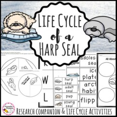 Harp Seal Life Cycle Diagram Wiring For Air Conditioning Unit Of A By Printableprompts Teachers Pay