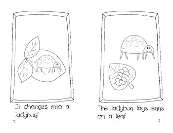 Life Cycle of a Ladybug: {Freebie} by Michelle Griffo from