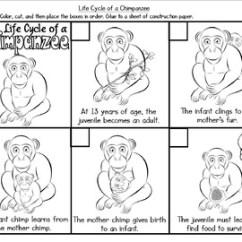 Bird Life Cycle Diagram Pyramid Of Giza Mammal Great Installation Wiring Chimpanzee Trusted Diagrams Animal Masteringbiology A