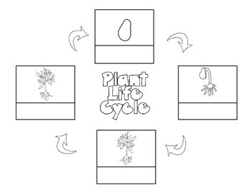 Life Cycle of a Plant: Journal, KWL, sequencing by
