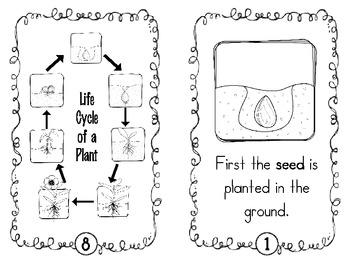 Life Cycle of a Plant {Science Mini-Book} by First Grade