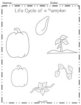 Life Cycle of a Pumpkin : Reading Street : Grade 2 by The
