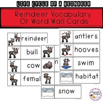 Life Cycle Of A Reindeer By PrintablePrompts Teachers