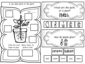 Life Science Interactive Journal {K-2} by Primary Graffiti
