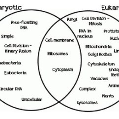 Eubacteria And Archaebacteria Venn Diagram Plot Graphic Organizer Life Science Manipulatives By Seriously Tpt