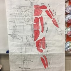 Skeletal And Muscular System Diagram Reversing Camera Wiring Life Size Project By Rachel Pivonka