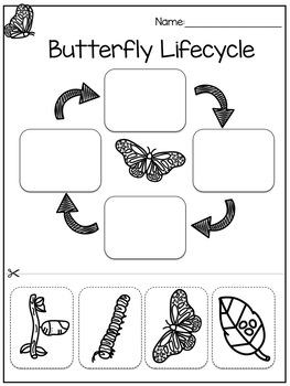 Lifecycle of a Butterfly Sequencing Cards and Worksheet by