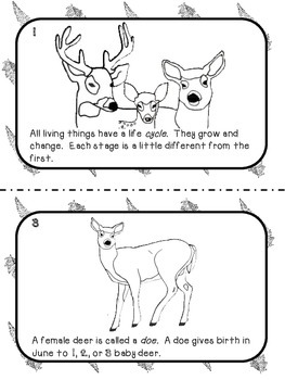 Life Cycle of the White-tailed Deer Reader by The Meek