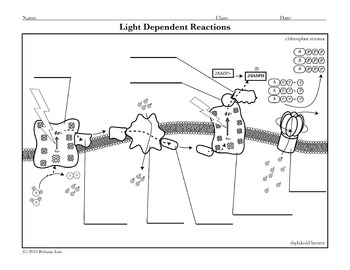 Photosynthesis Activity: Light Dependent Reactions