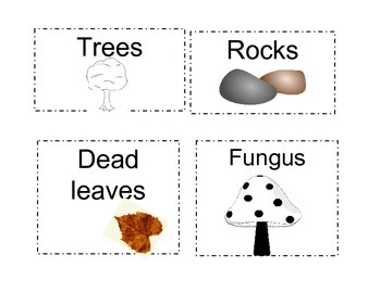 Living and Nonliving things card sort by Coopers Science