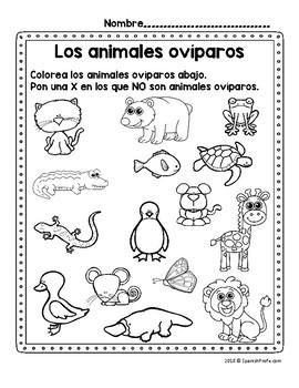 Los animales oviparos (Oviparous Animals in Spanish) by