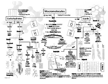 Macromolecules EOC / Content Review by Biology Resource