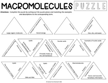 Macromolecules Puzzle for Review or Assessment (Editable