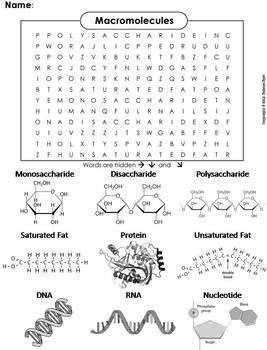 Macromolecules Worksheet Word Search By Science Spot