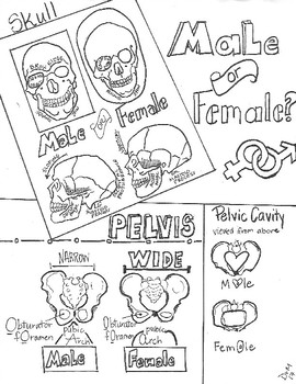 Male or Female? Forensic Anthropology Sketch Notes Doodle