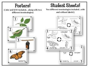 Metamorphosis Bulletin Board Set. Science Bulletin Board
