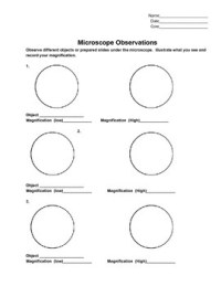 Microscope Observation Lab Sheet by Mrs Ruff