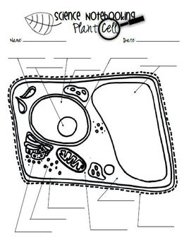 Microscope and Cell Study {Intermediate} by My Dear It's