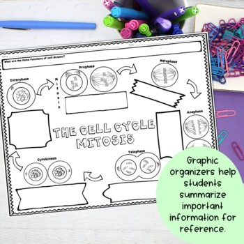 Mitosis Cell Cycle Nonfiction Reading and Graphic