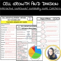 Mitosis Worksheet - Cell Growth and Division by Happy ...