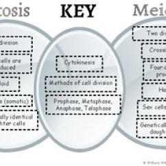 Mitosis And Meiosis Venn Diagram Answers Harbor Breeze Ceiling Fan Remote Wiring Vs By Brittany Gibson Science Tpt