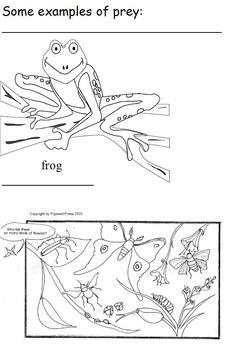 Modified Science Notes; Examples of Predator vs. Prey