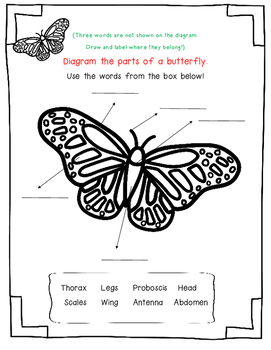 Monarch Butterfly by Gail Gibbons-A Nonfiction Book