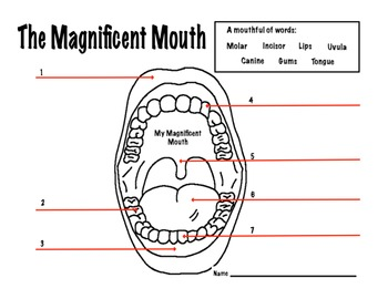 Mouth Dental Health Magnificent Mouth Worksheet By Kate S