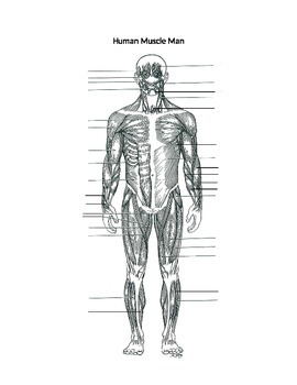 Label Muscles Worksheet body muscles t Anatomy and