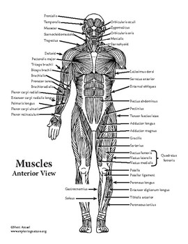 Muscle Study Guide for Kinesiology by Exploring Nature