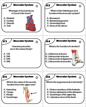 Muscles Task Cards/ Muscular System Task Cards (Human Body