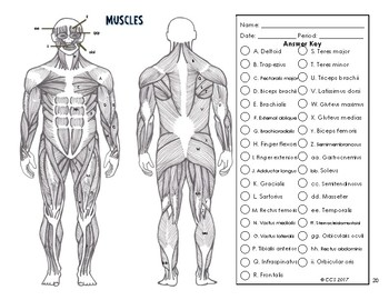 Anatomy Leg Muscles Coloring Worksheets Coloring Pages