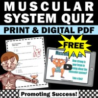 FREE Download Muscular System Worksheet, Human Body