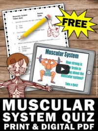 FREE Download Muscular System Worksheet, Human Body ...