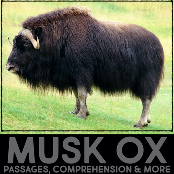 brown bear diagram 99 softail wiring musk ox all data informational article qr code research fact sort tpt