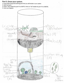 NGSS Model Matter and Energy in Ecosystems (5-LS2-1 and MS