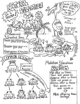 Natural Selection Survival of Fittest Sketch Notes W/Tchr