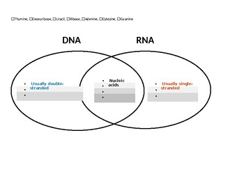 Nucleic Acids & Protein Synthesis Concept Maps
