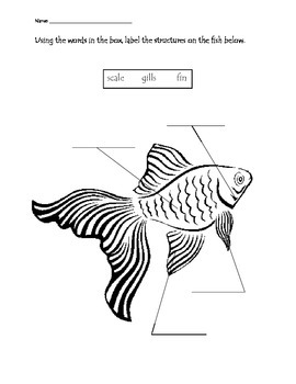 Ocean Animals Structure Labeling Worksheets By Maestra