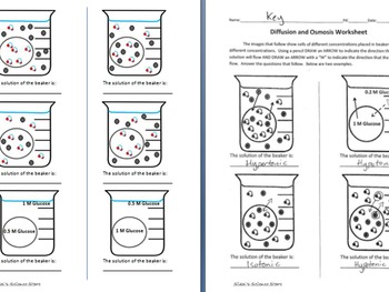 Osmosis and Diffusion Worksheet by Sidol's Science Store