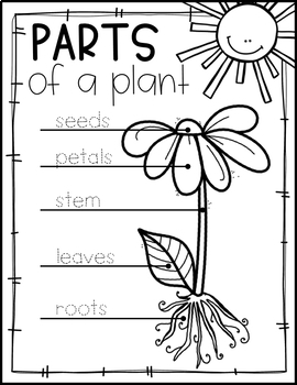 PLANTS THEME ACTIVITIES FOR PRESCHOOL, PRE-K AND