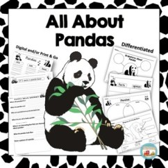 Panda Bear Diagram 4 Wire Dryer Plug All About Pandas Writing Prompts Graphic Organizers By 123kteach