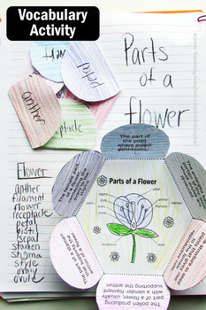 Parts of a Flower Label, Science Interactive Notebook