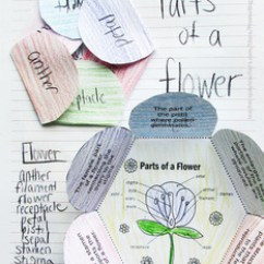 Diagram Of A Flower And Its Parts Sump Pump Wiring Label, Science Interactive Notebook Plant Activities