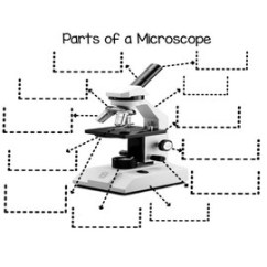 Microscope Diagram Unlabeled Limitorque Wiring Diagrams Parts Of A Foldable By Sciencerly Tpt