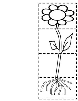 Parts of a Plant Fill in the Blank Flap Book by Mrs