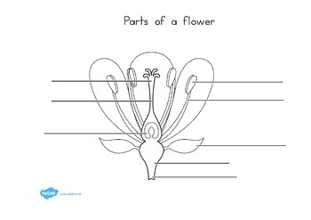 parts of a flower diagram wiring for trailer brake away plant and labelling worksheet by twinkl printable resources
