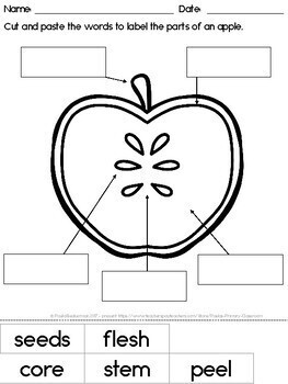 Parts of an Apple diagram and worksheet FREE by Paula's